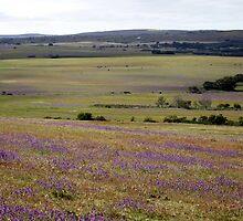 Fields of purple by Antionette