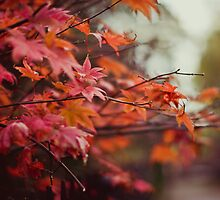 Acer by Marian  Hilditch