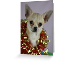 Christmas Chihuahua Greeting Card