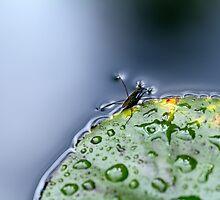 Water Hopper by Rebecca Cozart