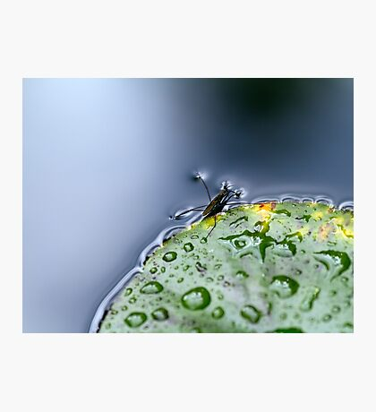 Water Hopper Photographic Print