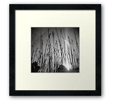 Wheat Sun Framed Print