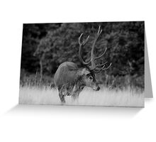 Stag in Richmond Park Greeting Card