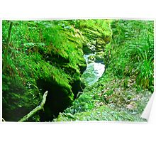 Stream winding through Mossy Gorge Poster