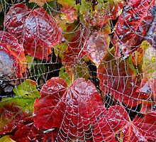 Who Lives On A Web Like This? by Barrie Woodward