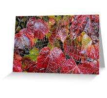 Who Lives On A Web Like This? Greeting Card