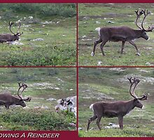 Following A Reindeer by ArtOfE