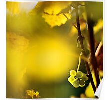 2012 - leftover at the vineyard Poster