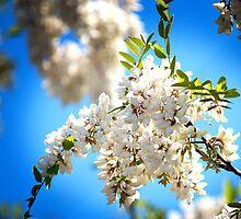 White Flower by Joey Dunn