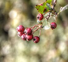 red berries by Nicole W.