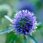 Blue thistle ball by marina63