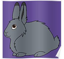 Gray Arctic Hare Poster