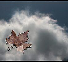 Leaf reflection by jonshock