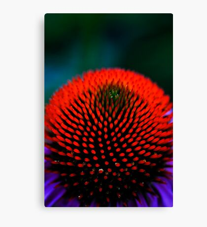 The Red Ball Canvas Print