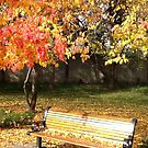 The bench by Vesna *