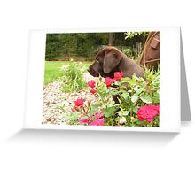 Chocolate and Red Roses Greeting Card