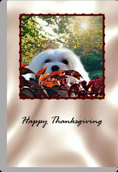 Snowdrop the Maltese Thanksgiving Card by Morag Bates