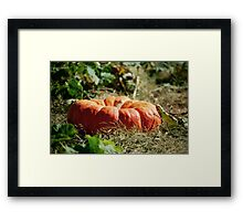 In the Pumpkin Patch Framed Print
