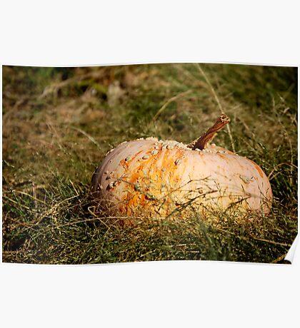 Bumpy Pumpkin Poster