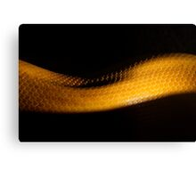 Mid Slither Canvas Print