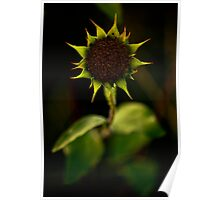 Roses are red, Violets are blue, Sunflowers are yellow. Poster