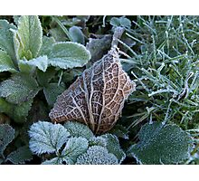 Frost and Coloured Leaves texture Photographic Print