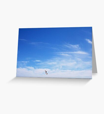 Seagull One - 10 10 12 Greeting Card