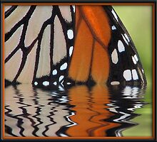 Monarch Reflection by George  Link