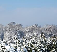Ashurst Wood Snow by Sue Robinson