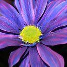 Intense flower by Tiffany Vest