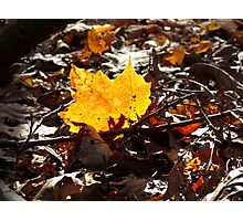 It's Autumn in New York! Photographic Print