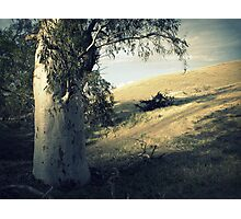 Prelude to a Bonfire. Photographic Print