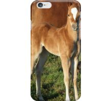 Foal standing  iPhone Case/Skin