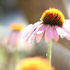 Sunbathing Flower by CAPhotography