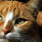 sunbathing cat by CAPhotography