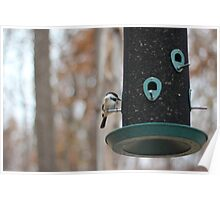 finch on a feeder Poster