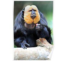 Saki Monkey. Poster