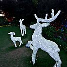 Reindeer Family by Sharon Kavanagh