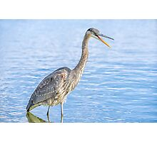Happy in my pond Photographic Print