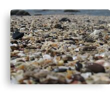Seashell Bits in the Sand Canvas Print