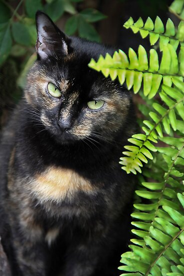 Missy, Behind the Fern by heatherfriedman
