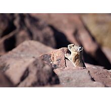 Pika 2 Photographic Print