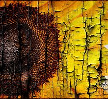 Sunflower on Wood by Charles Tribbey