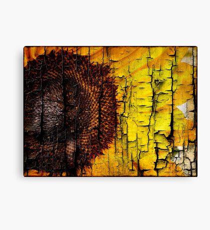 Sunflower on Wood Canvas Print