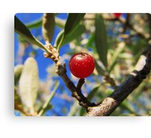 Red Berry? Canvas Print