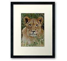 IF LOOKS COULD KILL - THE LION – Panthera leo Framed Print