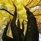 The Family Tree by Sharon Woerner