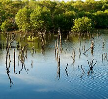 Dancing Mangroves by Renee Hubbard Fine Art Photography