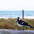 Beach Bird Seven - 14 10 12 by Robert Phillips