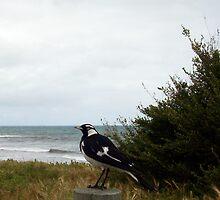 Beach Bird Six - 14 10 12 by Robert Phillips